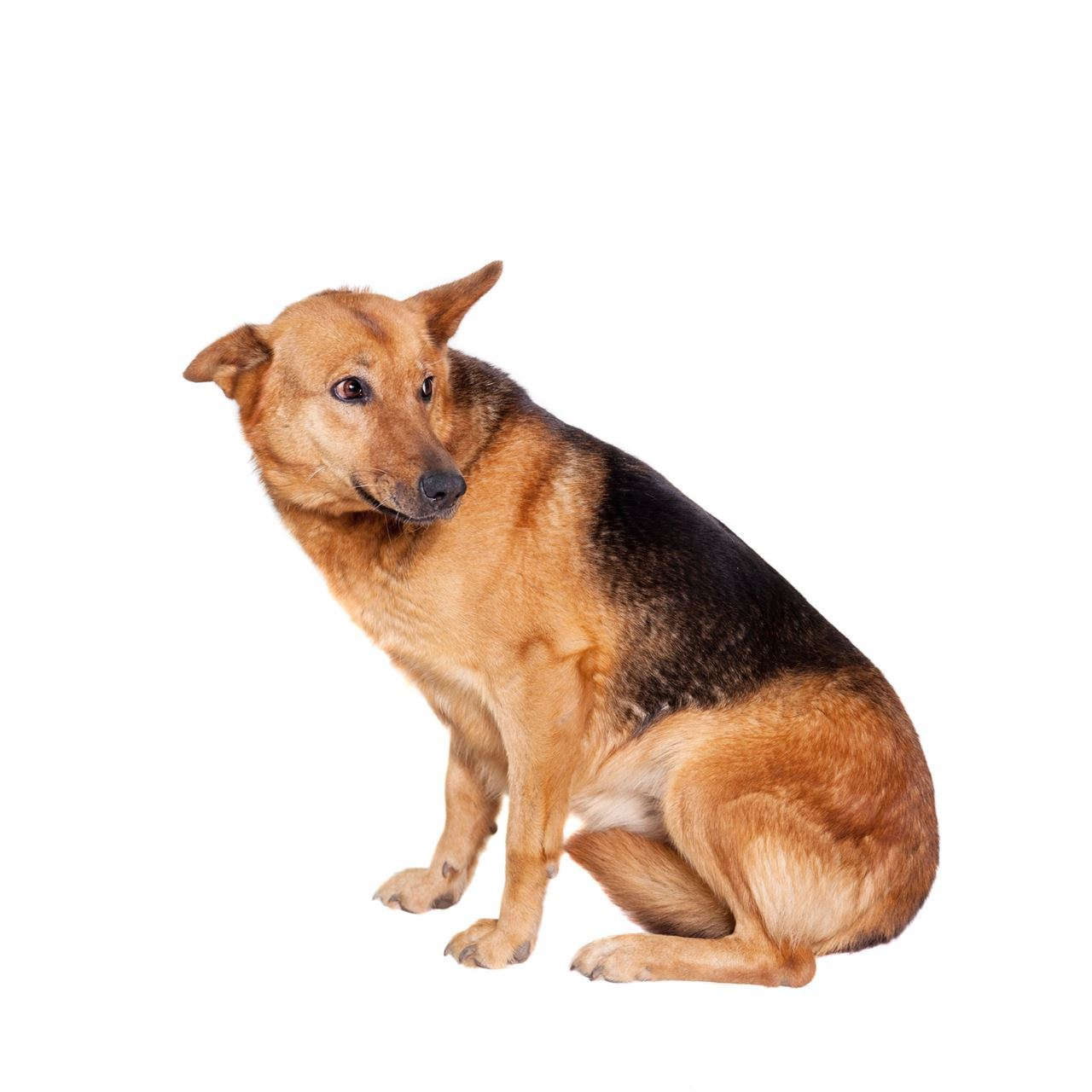 dog warning signs aggression goldenacresdogscom